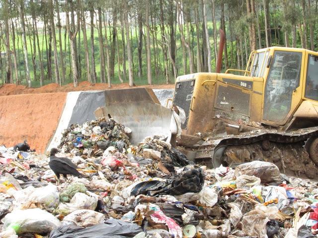 A foto mostra um aterro sanitário. No fundo se vê uma plantação de eucalipto e abaixo um barranco levantado. No centro da foto tem muito lixo misturado, urubus pretos e dá para ver o começo de um trator.