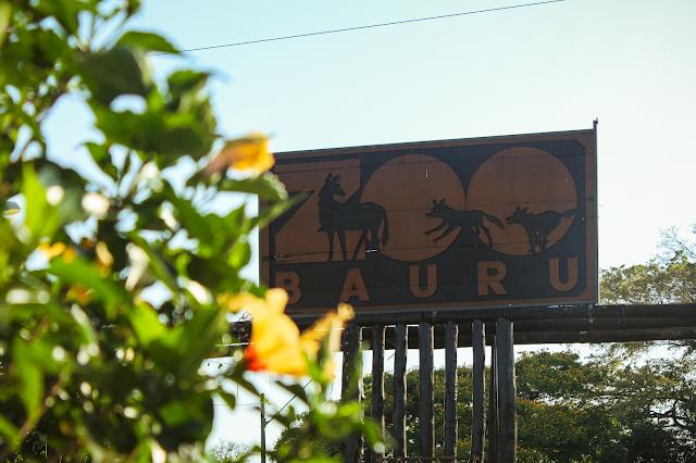 A imagem mostra a fachada do Zoológico Municipal de Bauru. No canto esquerdo, tem um ipê amarelo desfocado. Na fachada está desenhado na madeira a imagem de três lobos-guará.