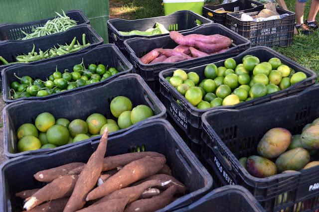 A foto mostra frutas e vegetais dentro de caixas de feira. Tem mandioca, manga, laranja, limão, jiló, batata doce e quiabo, cada um em uma caixa.