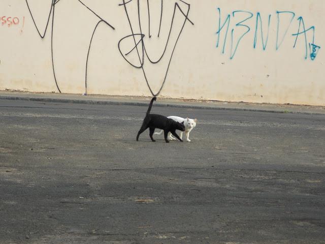 A foto mostra dois gatinhos andando sem rumo. Um é preto e o outro é branco. No fundo se vê uma parede pichada.