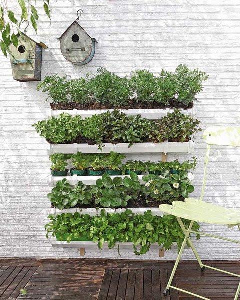 A foto mostra cinco prateleiras de jardins verticais em uma casa. A parede é branca, o dia está com sol e as plantas são verdes.