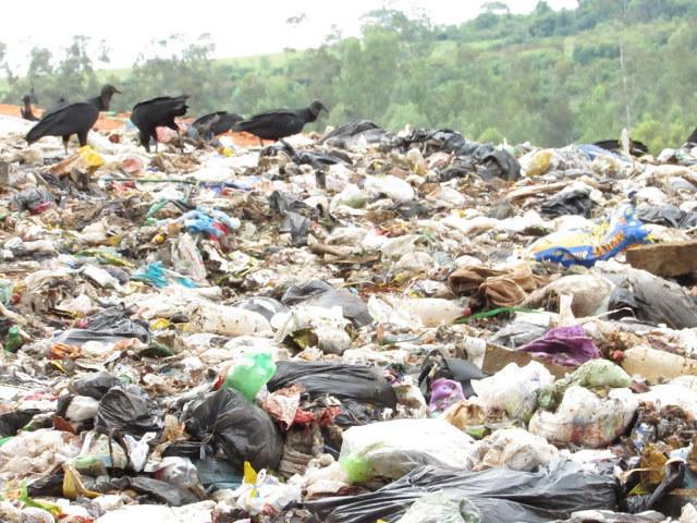 A foto mostra um aterro sanitário lotado de lixo, a maioria é plástico como sacolas e sacos. Por cima do lixo, no canto esquerdo superior, se vê três urubus andando sobre os resíduos. Ao fundo, se vê a vegetação verde.