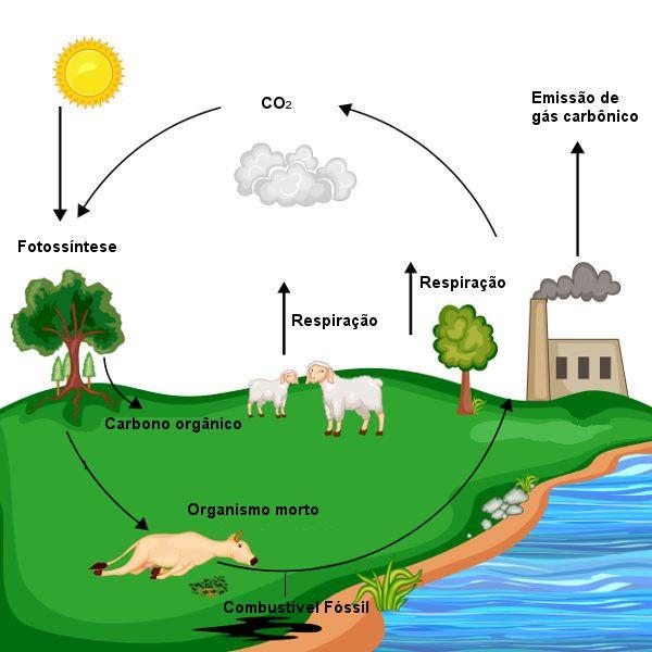 Fotossíntese - organismos morto - emissão de gás carbônico- CO2 - fotossíntese.