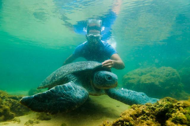 mergulhador acariciando uma tartaruga marinha