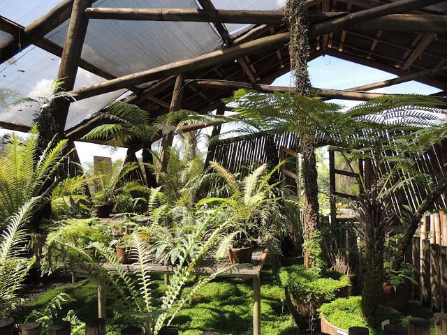Samambaias do Jardim Botânico de Bauru