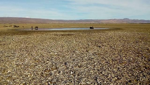 Lagoa de Itaparica