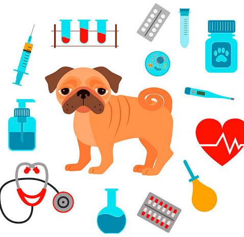 Guia de Profissões: Médico Veterinário