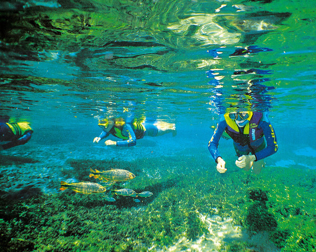 Mergulhadores e peixes dentro de um rio