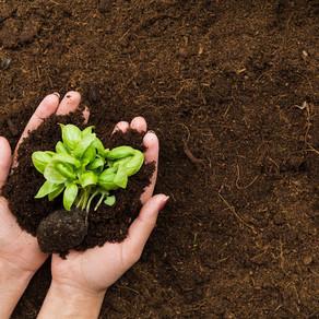 Redução de lixo orgânico através da compostagem