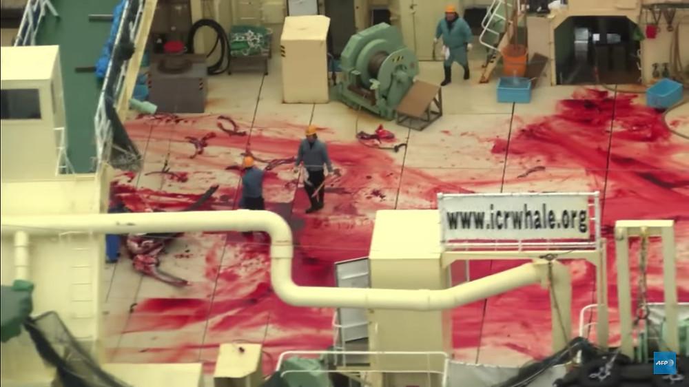 A foto mostra um navio cheio de sangue após matarem baleias.