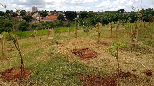A foto mostra uma região plantada com novas mudas de árvores. O solo está remexido e onde não foi plantado, possui grama. No fundo se vê a cidade do alto.