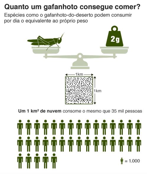 A imagem diz: Um gafanhoto come por dia o equivalente ao seu peso que é 2 gramas. Portanto 1 kilometro quadrdado de nuvem come o mesmo que 35 mil pessoas.