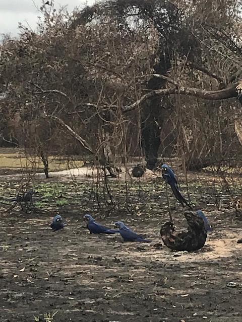 A foto mostra aves na fazenda após o fogo ter sido apagado.