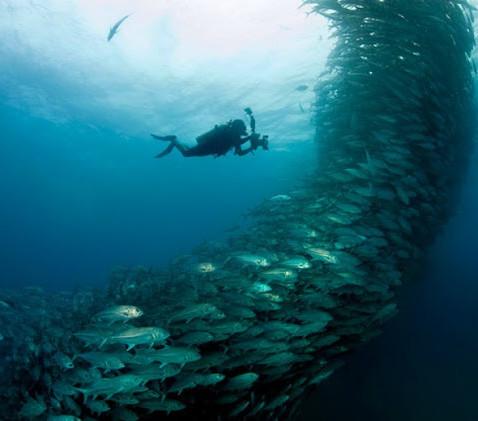 Guia de Profissões: Oceanografia