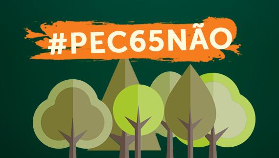 A imagem mostra desenhos de árvores e a mensagem: #PEC65NÃO