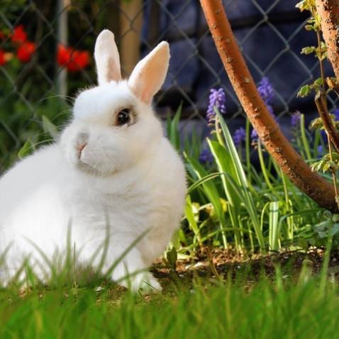 Cruelty Free: uma alternativa aos testes realizados em animais
