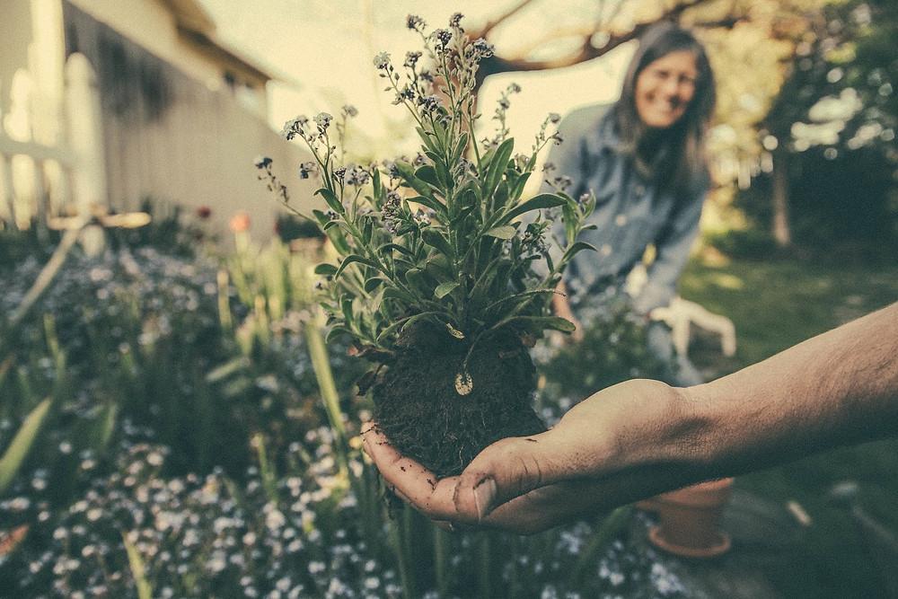 Uma mão segura uma muda de planta. Uma mulher sorri lá atrás, no fundo da foto.