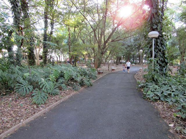 A foto mostra o Bosque da Comunidade por dentro. No meio, tem uma passagem de asfalto e lá no fundo se vê uma pessoa caminhando. Tanto no lado direito quanto no esquerdo, se vê árvores e plantas verdes no chão. O sol está por trás das árvores.