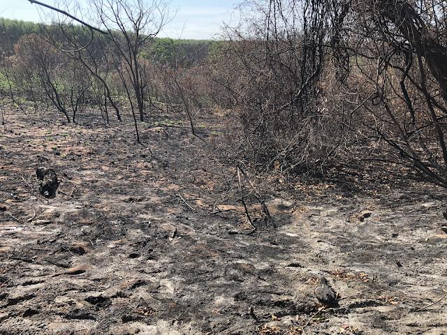 A imagem mostra uma foto de árvores queimadas, restos de frutas e sementes queimados. O chão e as árvores estão todas pretas por causa do fogo.