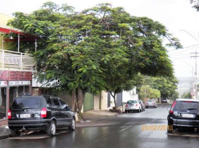 A foto mostra uma árvore grande plantada na calçada.