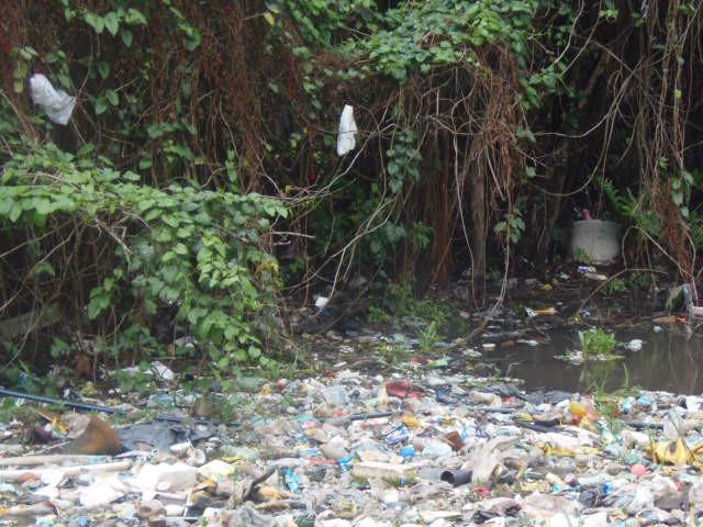 A foto mostra um manguezal - uma região alagada, com lama e várias plantas em volta. Na foto, fica visível uma grande quantidade de lixo boiando na região do manguezal. As plantas tem folhas verdes e galhos finos e marrons. A maioria do lixo é formada por plásticos e sacolas.