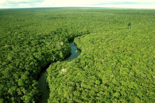 Floresta Amazônica, o rio corta a vegetação