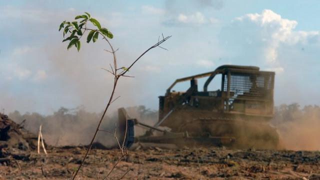 A foto mostra um trator passando em cima de um solo empoeirado e desmatado.