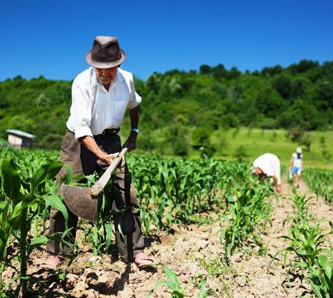 Dia mundial da alimentação e a importância da agricultura familiar