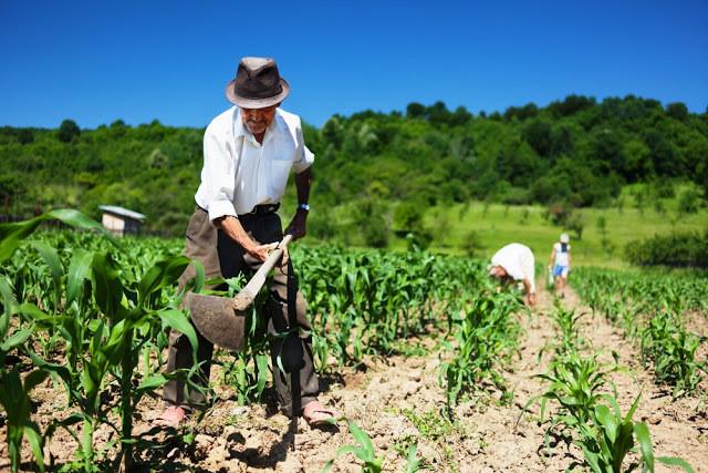 Um homem de chapéu usa a enxada na terra