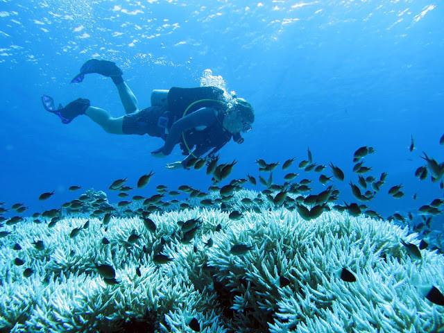 mergulhador no fundo do mar, peixes e coral