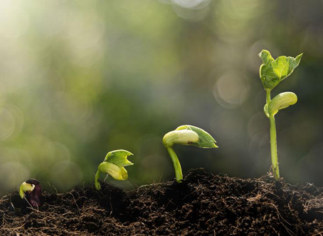 Three Steps Your Company Can Take to Set the Stage for Growth