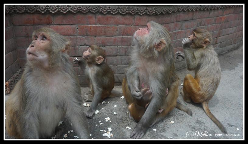 Les singes de Monkey temple