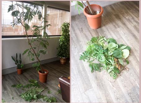 観葉植物と美容師