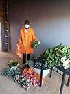 20200502-tim-orangefarm-veg2.jpeg