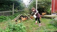 Hühner füttern ist kinderleicht
