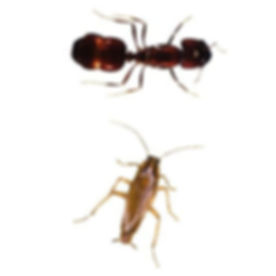 san-antonio-roach-ant-control.jpg
