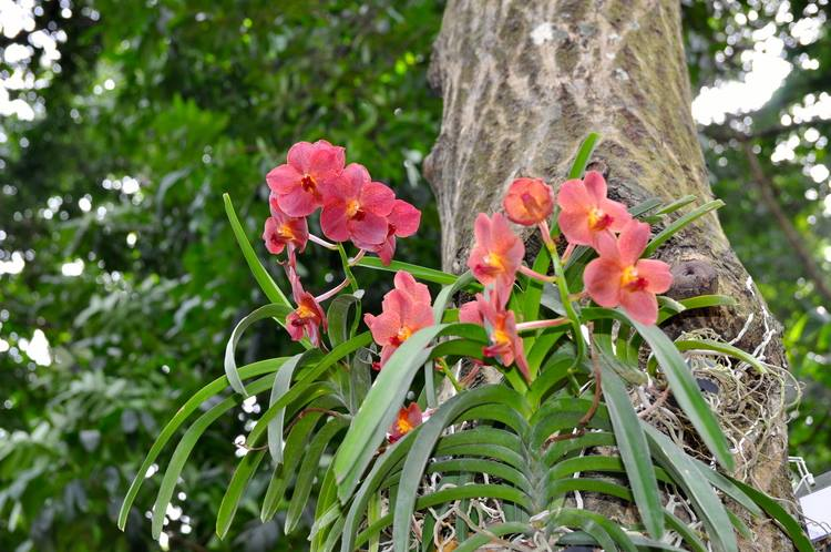 La Flore locale