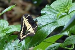 Plenty species of butterflies