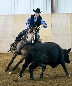 Schwartz Performance Horses