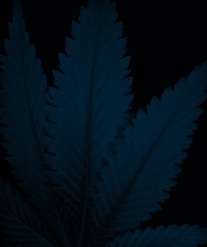 Blue_CannabisCamera.jpg
