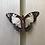 unmounted entomology specimens Melbourne museum
