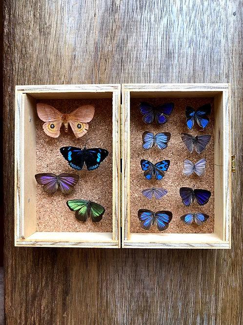 Australian Entomological Supplies storage box