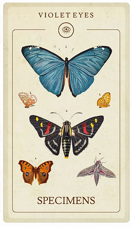 Unmounted Entomology specimen to buy Australia.