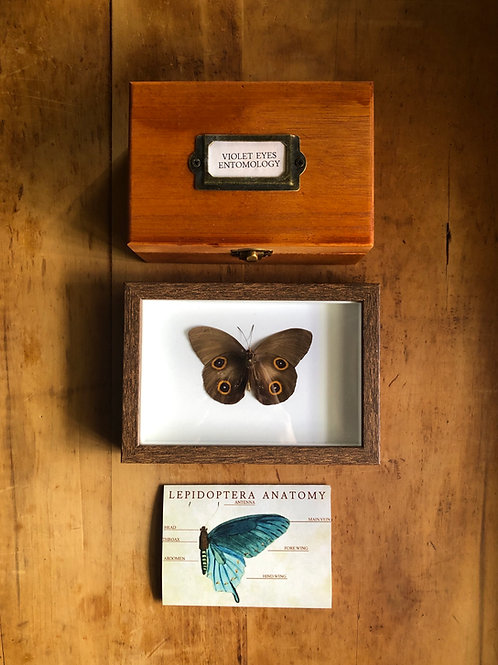 Digital Entomology Guide: Vol 1