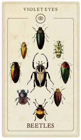 Beetle Specimens Taxidermy Wholesale Australia