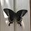 Thumbnail: Papilio Blumei (Green Swallowtail)