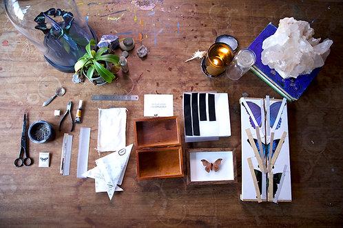 DIY Entomology kits etsy