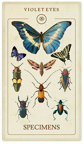 Butterfly Moth and Beetle entomology specimens unmounted sale