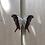 Thumbnail: Marpesia Zerynthia