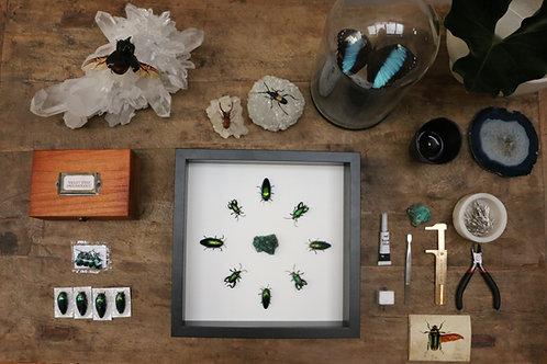 Entomology Guide: Volume 2